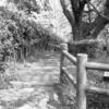 Photo No.88