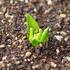 【大寒】俺の植物達の変化