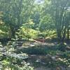 【愛媛県久万高原1】ふるさと旅行村キャンプ場~高原で青空と森林浴とBBQ