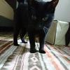 黒猫ドキュメント① ~ちびまる夫婦の消息を追え~