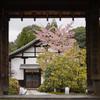 雲龍院で河津桜や梅やあれやこれやを楽しむ@2021