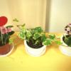 花を植木鉢に。
