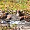 自宅付近の鳥さんたち🐤と春の兆し・・・(*^^*)