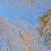 東熊遊山「風」