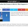 空中で凍り付く鳥....世界で何が起こっているのですか?