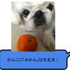 【ペット】犬に「みかん」をあげても大丈夫か?