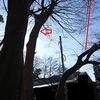 住宅際の枝降ろし断幹 3日目 クスノキの巨木無事終了
