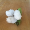 綿花の収穫