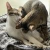 チトセくんの去勢手術完了、そして嬉しい報告が…【保護猫日記】