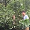 ホオノキの赤い実を見つけた。ホオノキは魔法の樹🌳🌸