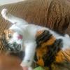 【愛猫日記】毎日アンヌさん#171