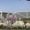 謎のダムカード〜ダムの博物館、狭山市博物館と狭山池でお花見