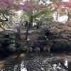 紅葉とシカにかこまれた、秋晴れの奈良公園