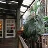 【古き良きリノベカフェ】Merchant's Lane Cafe【チャイナタウン東側あたり】