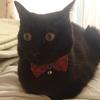 今日の黒猫モモ&白黒猫ナナの動画ー557