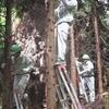 森林実習(枝落とし)2日目