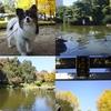 隅田公園で黄葉を楽しむ