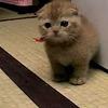 タワシみたいな子猫がごろんごろんしてて、鼻血出るほどかわいい