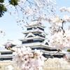 桜が教えてくれた大切なこと / The important thing that cherry blossoms taught me.