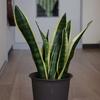 我が家の植物紹介「室内編」