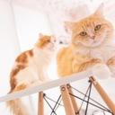 ネコとナマコの映画関係雑談ブログ
