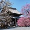 これから見頃の京都の梅 【過去写真】