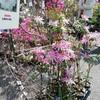 松山市 総合公園の植木まつり
