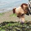 えんぞう 海へ。 海の公園でBBQもしたよ。