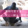望遠レンズ持って上野動物園で色々撮ってきた!