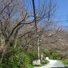 笹山公園 〜 リベンジ 〜
