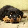 犬が下痢をしてしまった時はどうすればいい?子犬の下痢は要注意!?軟便・下痢などの対処方法とは?