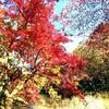 【千葉】泉自然公園で紅葉を楽しむ フランス発のフォレストアドベンチャーもあるよ【紅葉】
