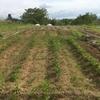 ジャガイモの土寄せ~ラボ4畑