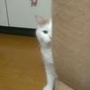 もう疲れて何もしたくない時にお勧めの猫様の謎行動特集