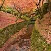 Z 50 京都、東福寺の紅葉を撮影①