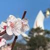 《万博公園の梅まつり》たまにはゆっくり花でも見て歩きませんか?