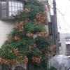 大阪まち遊学2010? 〜大正,モ〜一杯!〜 その1。
