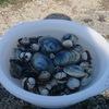 2018年春!浦安三番瀬に潮干狩りに行ってきました。一番近い駐車場は?あさり、ホンビノス、マテ貝、赤貝が採れ、GW前から盛り上がってます。