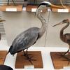 野鳥研究の総本山『我孫子市 鳥の博物館』