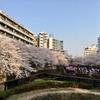 【アラフィフライフ&40代ファッションコーデ】目黒川の桜満開でした(^^)&大好物の金目鯛ディナー