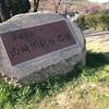 桜咲く晴れた朝はシューズをはいて桜並木をランニングにしてきた!(山崎川編)