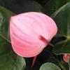 夏の花 熱帯植物