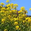 うそのようなぽかぽか陽気&今年初めて撮れたのはキタテハ&「単眼複眼」にメジロと河津桜の写真♪