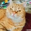 ひょっこりはんな猫は母のお腹の上で爆音ゴロゴロ