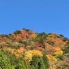 11月の草花の歳時記:べふ峡の紅葉@香美市物部