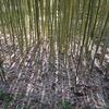 12月、初冬(?)の京都府立植物園。SONY α5100+SIGMA 56mm F1.4、LUMIX GM1+15mm/F1.7で撮影。