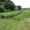 平和台自然農園 秋1