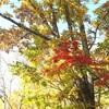 乗鞍高原の秋模様