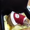 暖かいところは猫に聞け!!ってそこは私がパソコンをする椅子なんだけどwww(373日目)