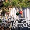 週末ライフ。自宅で楽しいクリスマスを迎えようとガーデン・デコレーションを始めてひと月。残る2週間に全力投球の朝夕です。